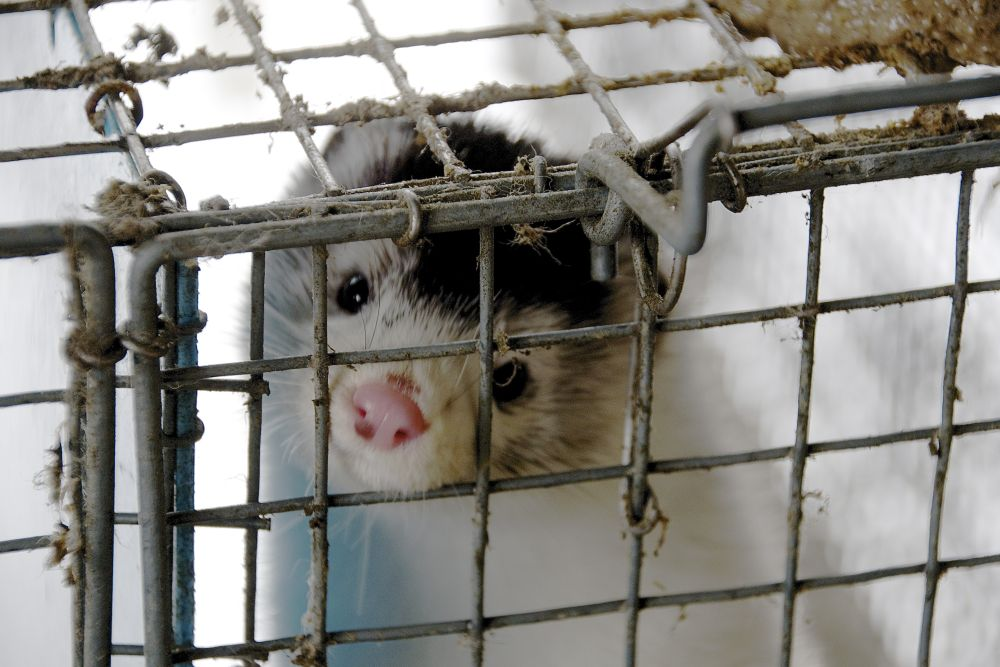 Foto: Loomakaitse Selts