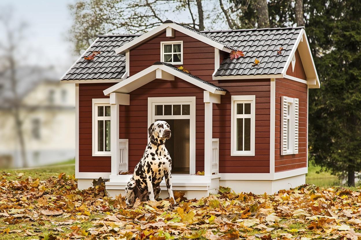 Vahva! Vaata, milline näeb välja eestlaste välja mõeldud nutikas koeravilla Lisatud video