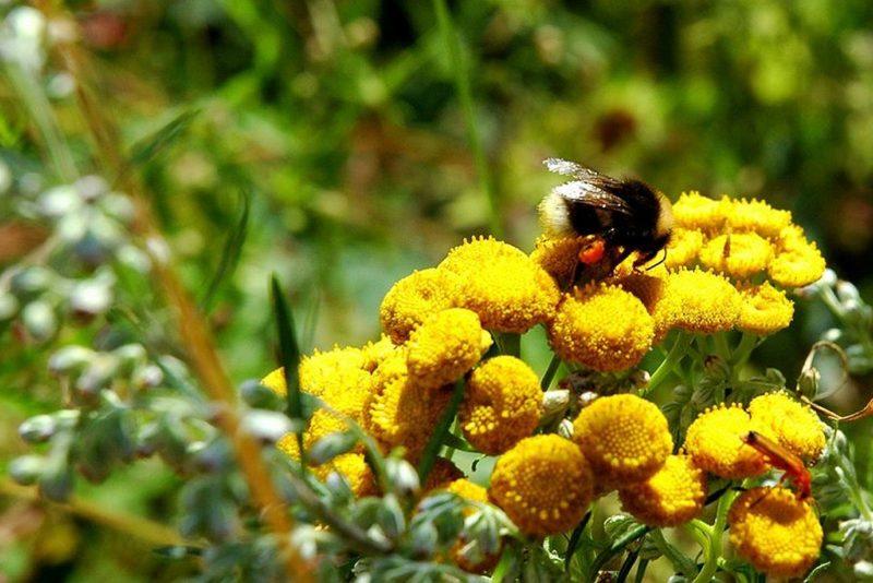 Riik hakkab toetama mesilasepidajaid