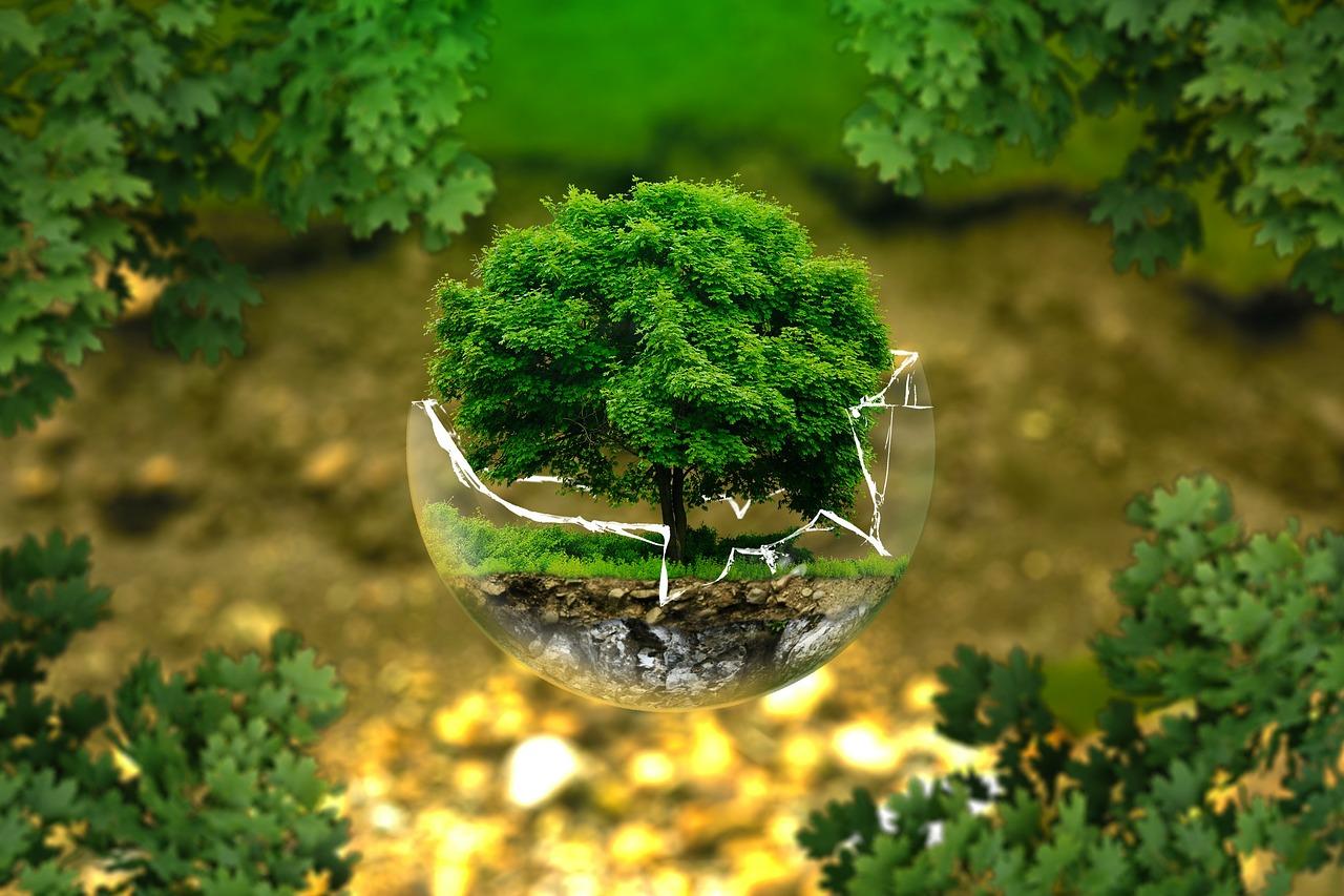 keskkond.Pixabay