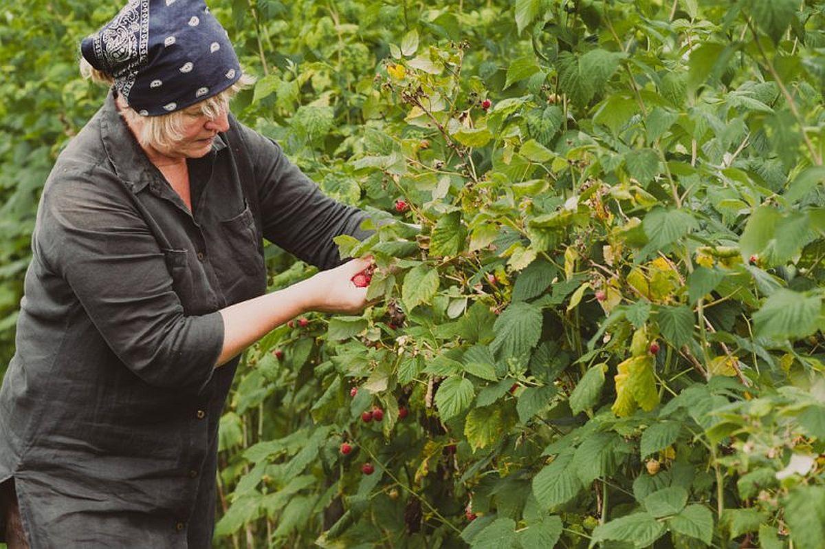 Aasta lõpuks prognoositakse põllumajanduses häid tulemusi