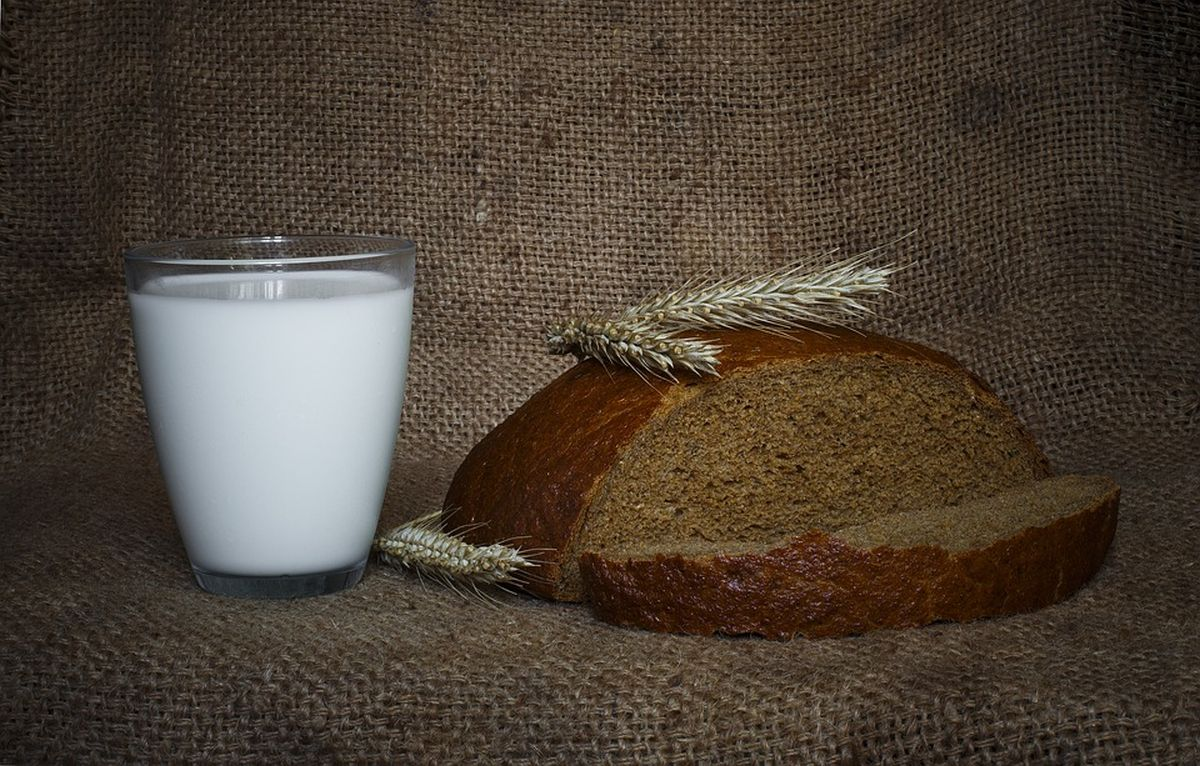 leib-piim-vili-põllumajandus