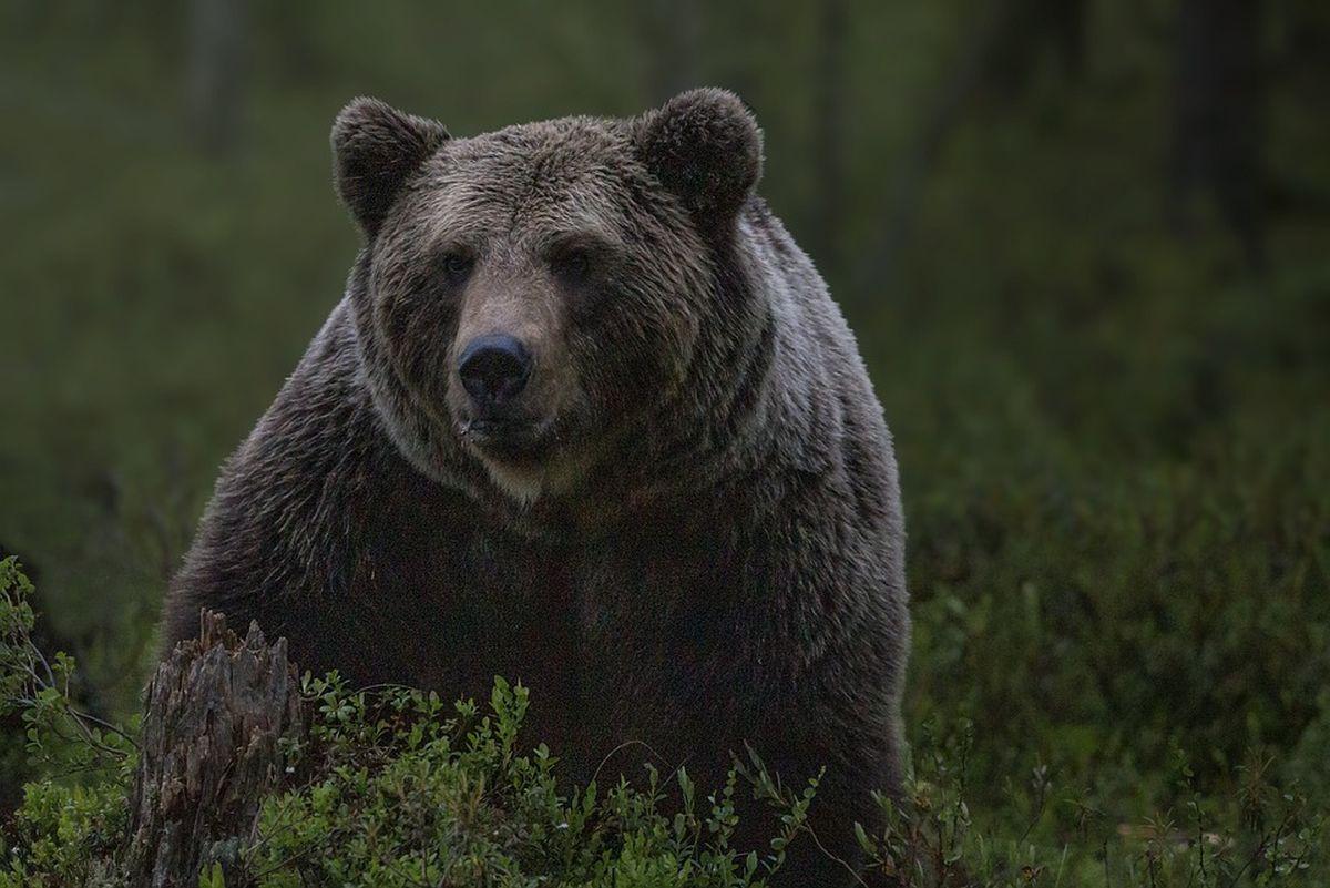 Karuvaatlus, militaar-merepark ja muu – EAS jagas toetust turismiprojektidele
