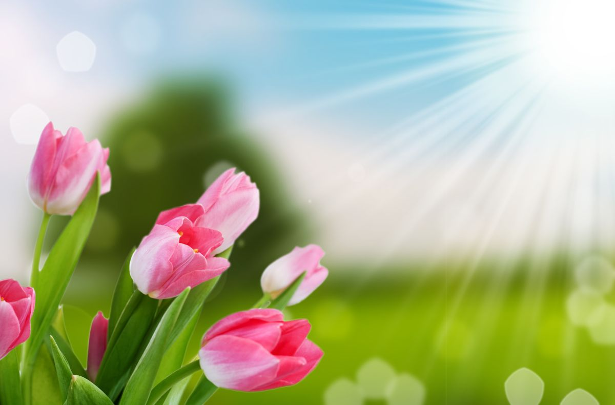 Flower,And,Nature,Spring,Bokeh,Background,With,Sun,Beam