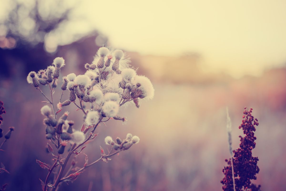 Vintage,Photo,Of,Wild,Flower,In,Sunset
